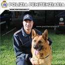 E' morto Buk, l'infallibile pastore tedesco antidroga della Polizia Penitenziaria